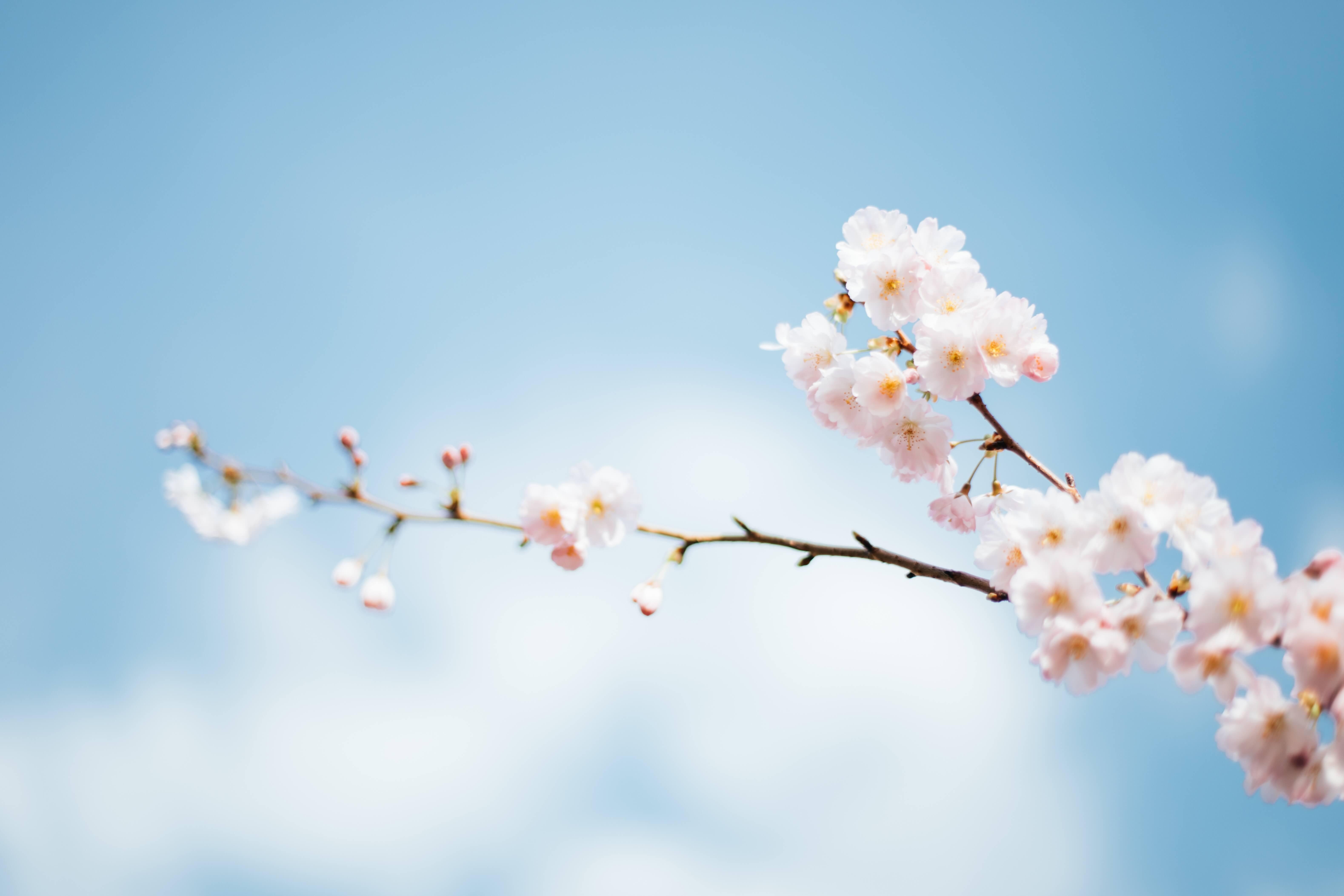 Forårsfest: Seneste tilmelding i dag!