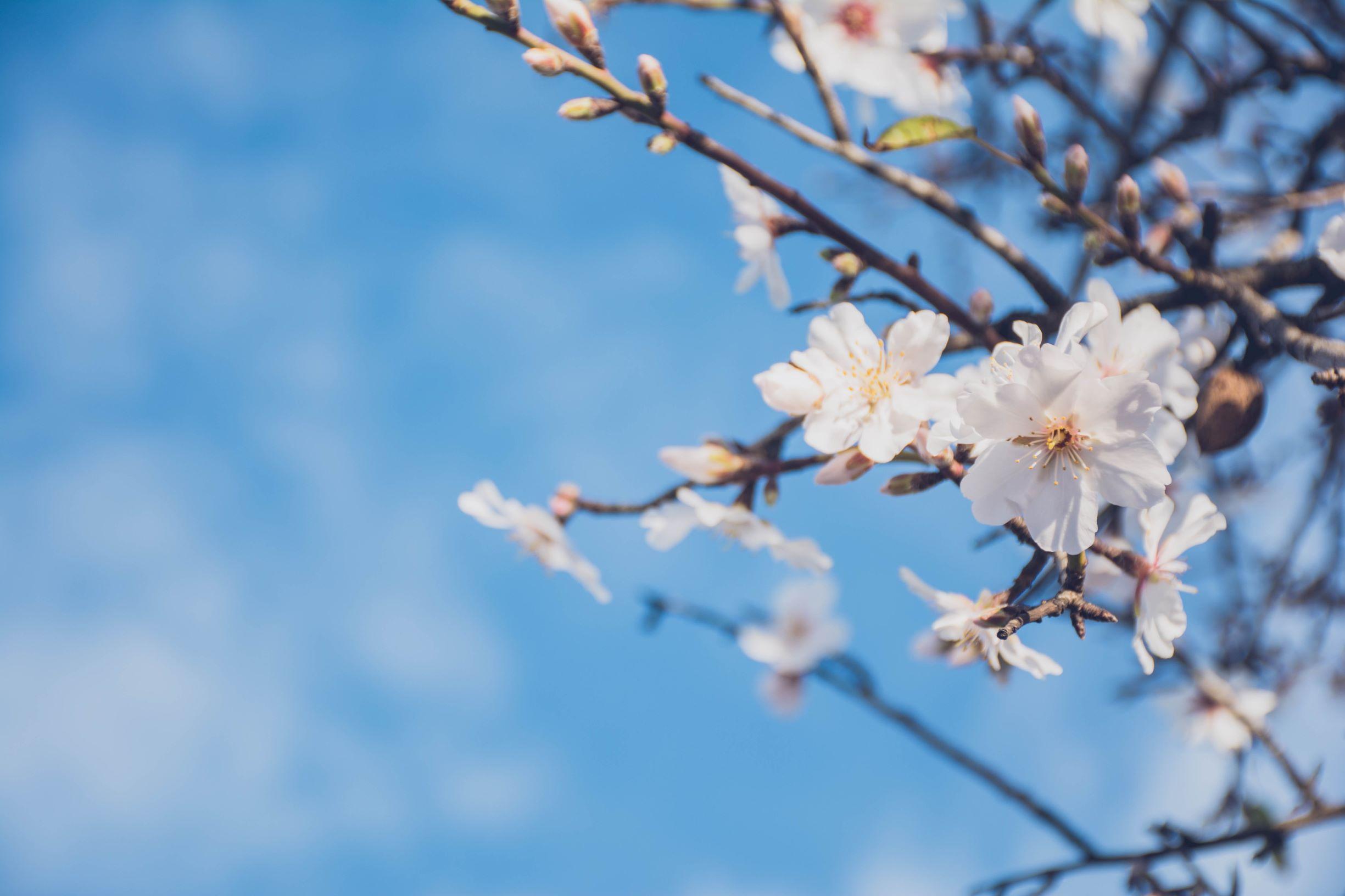 Husk: Registrer dig til forårsmødet den 17. april