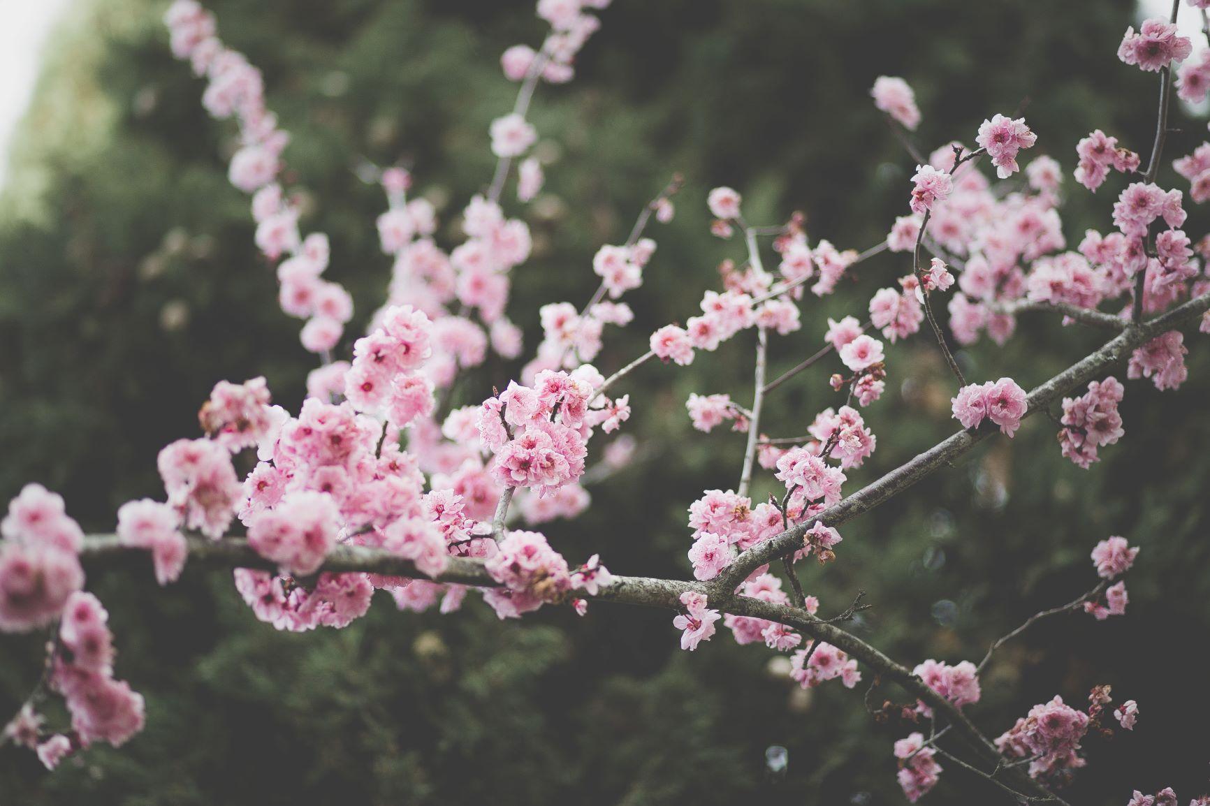 Husk: Tilmeld dig forårsmødet den 23. april